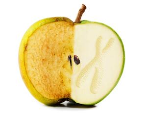 Manzana mitad oxidada y mita sana